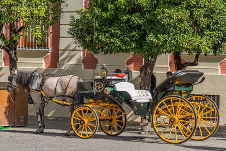 SEVILLE SPAIN, OCTOBER 17th 2020: Horse-drawn carriages for hire at the catedral of Seville, Seville, Andalusia, Spain