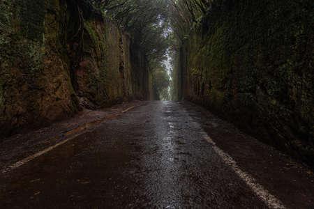 The beautiful hidden moss tunnel in Anaga rural park in Tenerife. Canary Island, Spain 免版税图像
