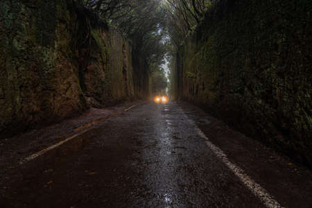 The beautiful hidden moss tunnel in Anaga rural park in Tenerife. Canary Island, Spain, background lights from a car