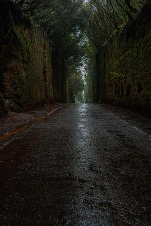 The beautiful hidden moss tunnel in Anaga rural park in Tenerife. Canary Island, Spain, vertical 免版税图像