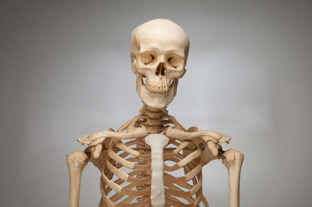 Human Skeleton photo