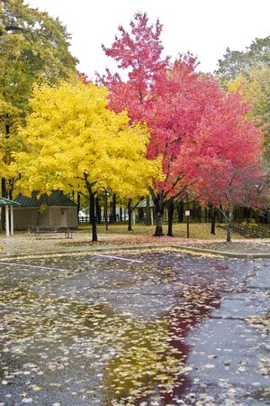 val trees Stockfoto