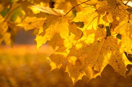 Golden colors in Autumn 免版税图像