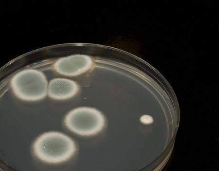 Microbiologia Archivio Fotografico - 5324394