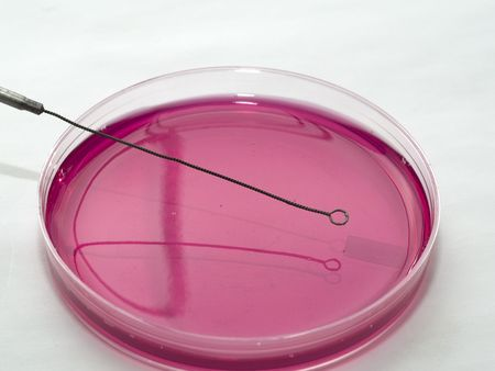 microbiologia: Herramientas de Microbiolog�a Foto de archivo