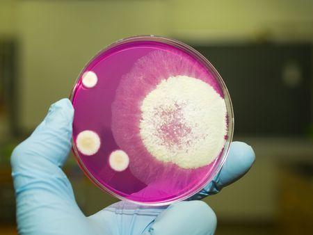 Mold Zdjęcie Seryjne