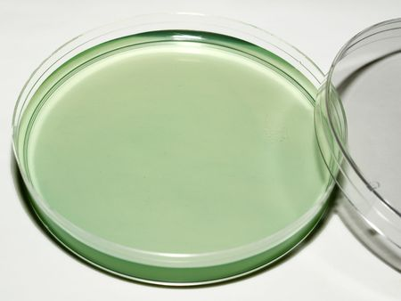 Petri Dish Zdjęcie Seryjne