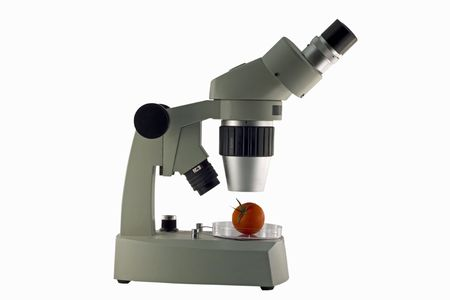 Food being studied under a microscope for germs.