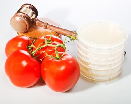 Gavel, petri plates and food  Standard-Bild