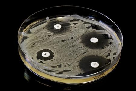 Testing different concentrations of antibiotics Stock fotó