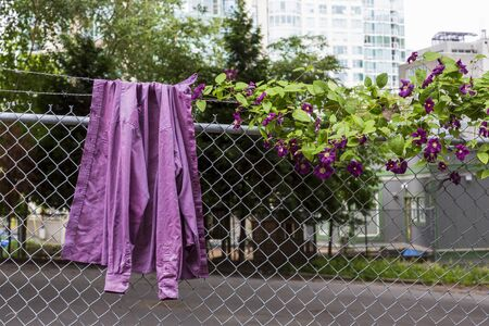 A shirt hanging on a metal fence with flowers growing on the fence.