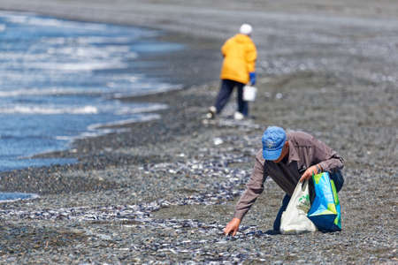 ST. VINCENT'S, NEWFOUNDLAND AND LABRADOR, CANADA - July 8, 2020.  People collecting caplin at the beach, taken on July 8, 2020, in St. Vincent's.