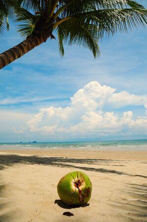 The big coconut on the sand beach photo