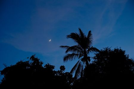 silhouette of palm tree over blue sky photo