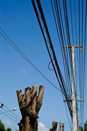 sawed: sawed tree under high-voltage cable