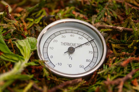 decomposing: Metric thermometer showing high temperature in the compost pile, close Up. Stock Photo