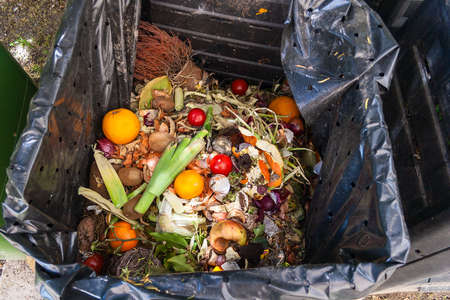 composting: fresh household scrap in the compost bin