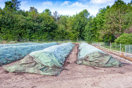 Industrial composting, compost piles covered to keep the humidity of the material