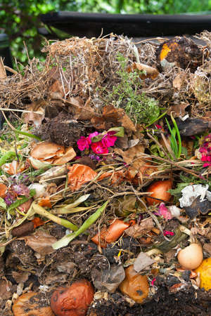kitchen scraps: Assorted kitchen and garden organic waste showing in an opened compost silo