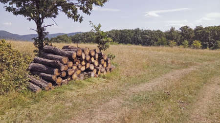 wood stock pile in the forest