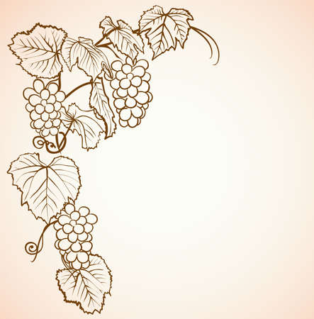 grapes on vine: background with vine