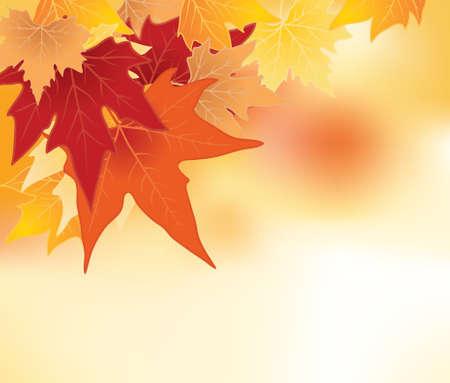 Autumn leaves achtergrond