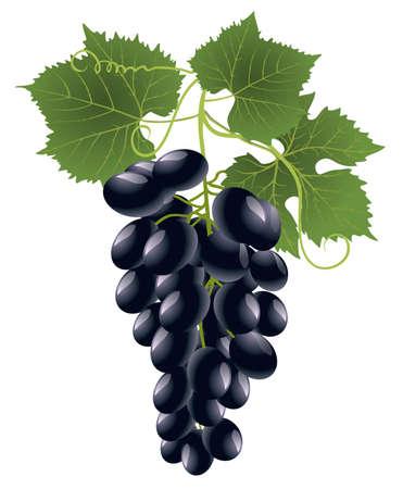 grape Stock Vector - 8344154