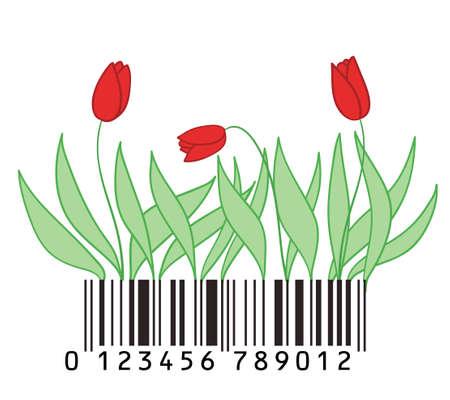 tulips on a bar-code ground  Vector