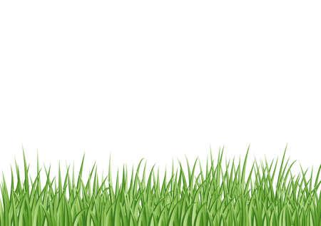 grass background Stock Vector - 9912930