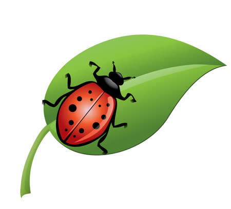 ladybird on a green leaf  Illustration