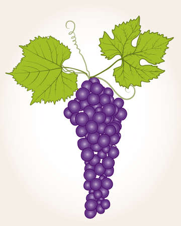 apprehension: grapes Illustration