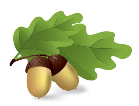 acorn: two acorns with green leaves