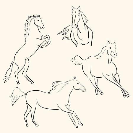 cavalli linea arte  Vettoriali