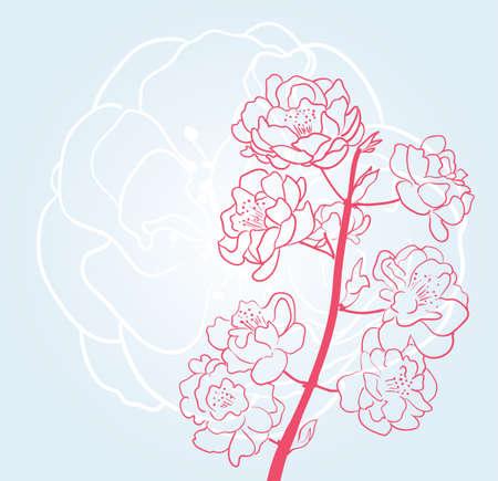 Sakura-Blüten