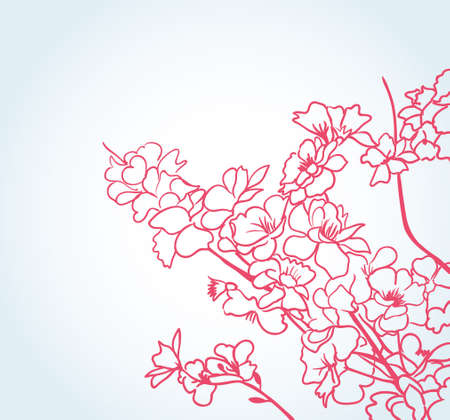 cherry blossom tree: sakura flowers  Illustration