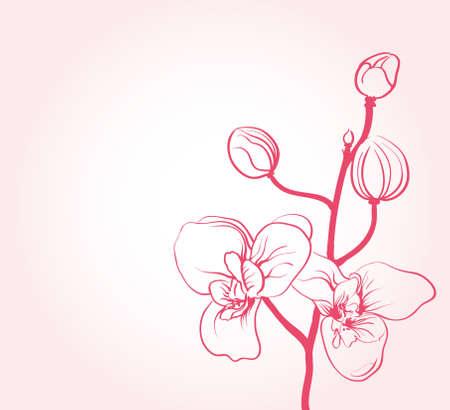 sakura flowers  Stock Vector - 9654927