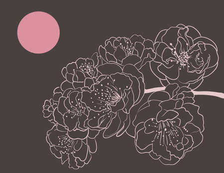 flor de sakura: flores de Sakura