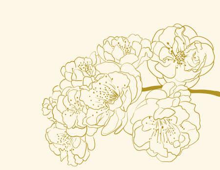 sakura flowers  Stock Vector - 9654965