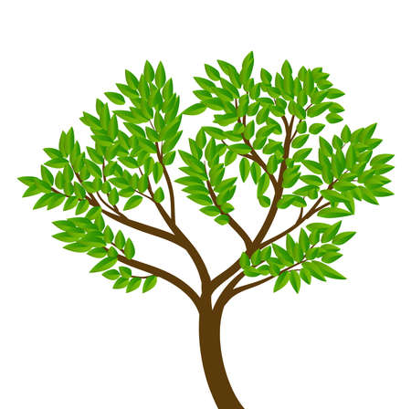 tree with green leaves Stock Vector - 9654947