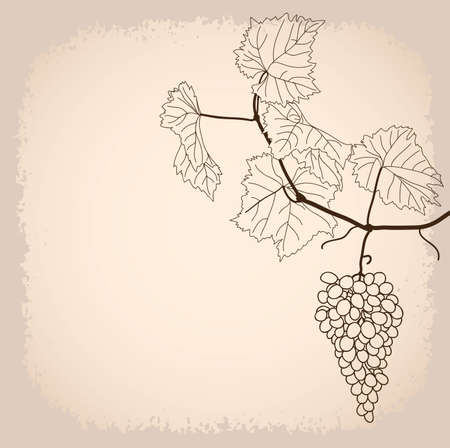 apprehension: background with grapevine in line-art style Illustration