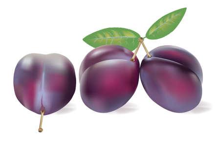 fruttosio: tre prugne realistico su bianco