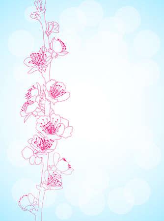 sakura flowers Vector