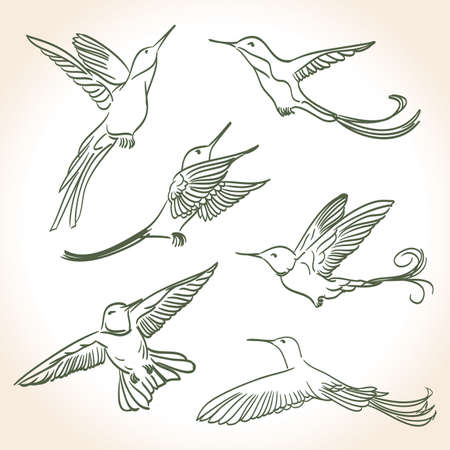 colibri drawing made in line art style Vector