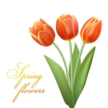 bouqet: realistic tulips bouqet  Illustration