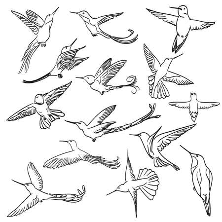 humming: colibri drawing set made in line art style