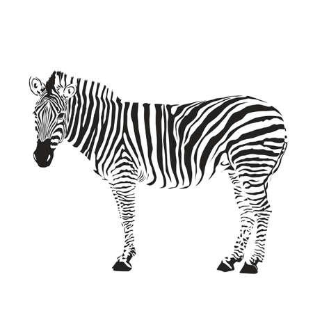 dobbin: zebra silhouette