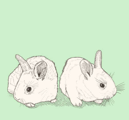 pencil drawings: two bunnies drawing Illustration