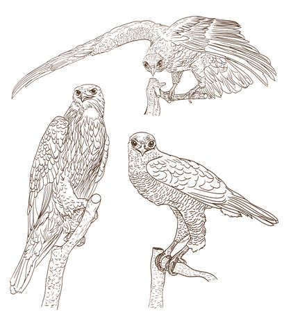 set of drawings of birds of prey