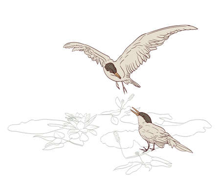 the pair: birds pair in spring drawing