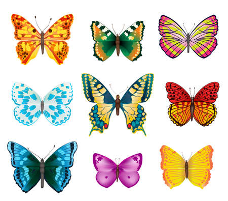 open wings: set of various colorful butterflies with open wings Illustration